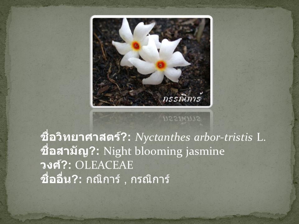 ชื่อวิทยาศาสตร์. : Nyctanthes arbor-tristis L. ชื่อสามัญ