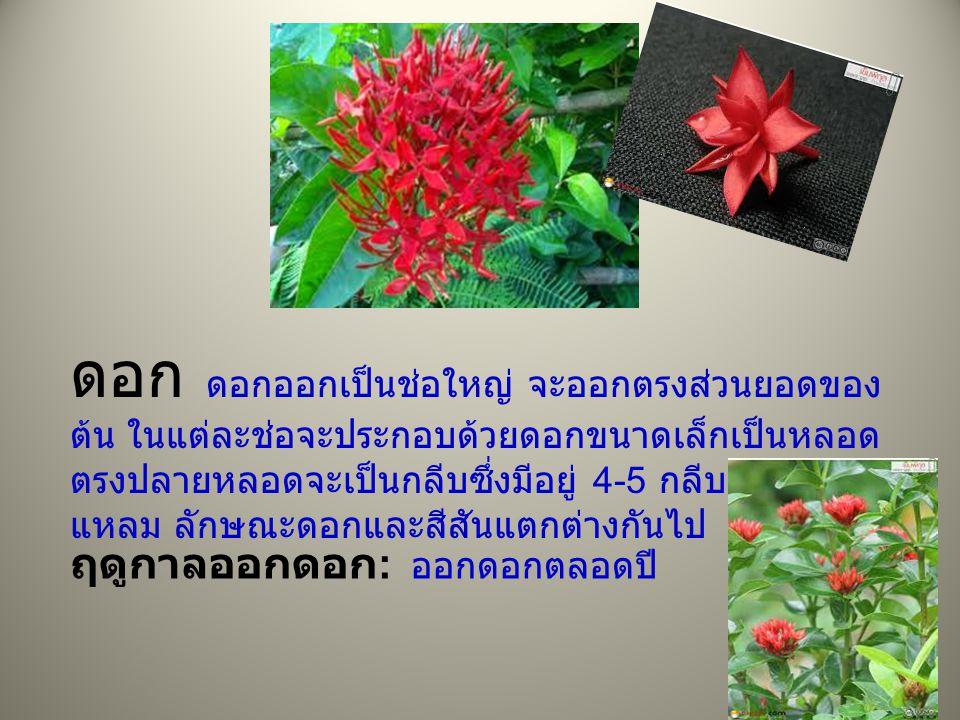 ดอก ดอกออกเป็นช่อใหญ่ จะออกตรงส่วนยอดของต้น ในแต่ละช่อจะประกอบด้วยดอกขนาดเล็กเป็นหลอด ตรงปลายหลอดจะเป็นกลีบซึ่งมีอยู่ 4-5 กลีบ ปลายกลีบแหลม ลักษณะดอกและสีสันแตกต่างกันไป