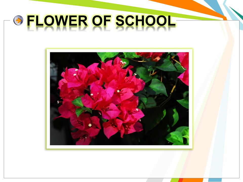 FLOWER OF SCHOOL