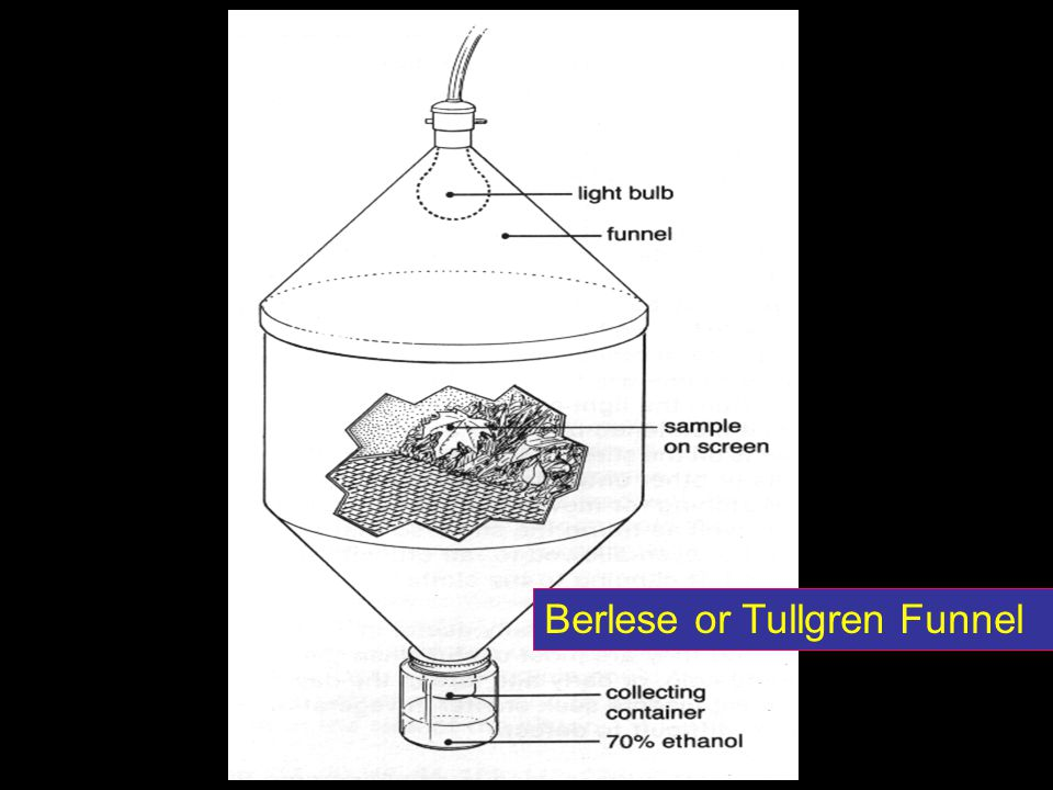 Berlese or Tullgren Funnel