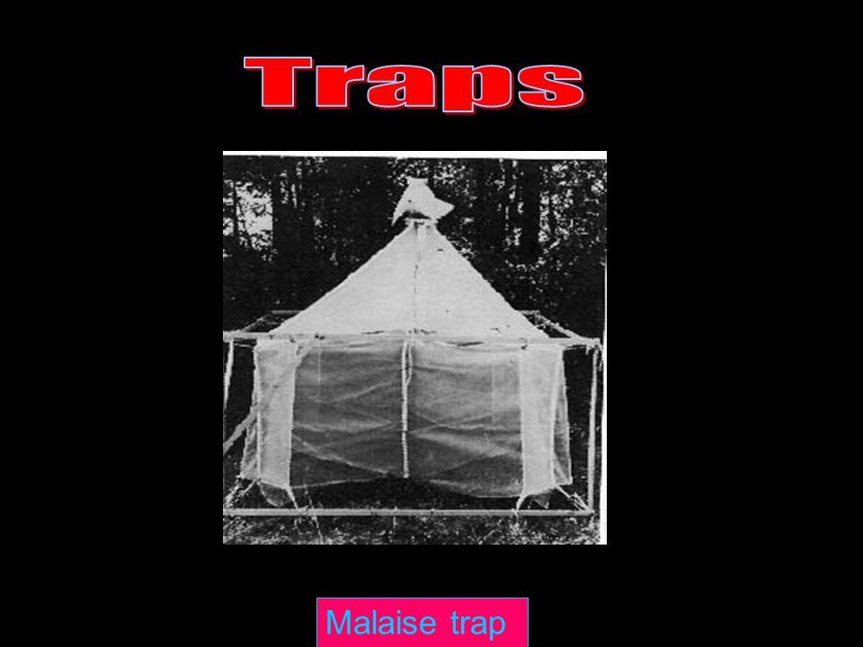 Traps Traps Malaise trap