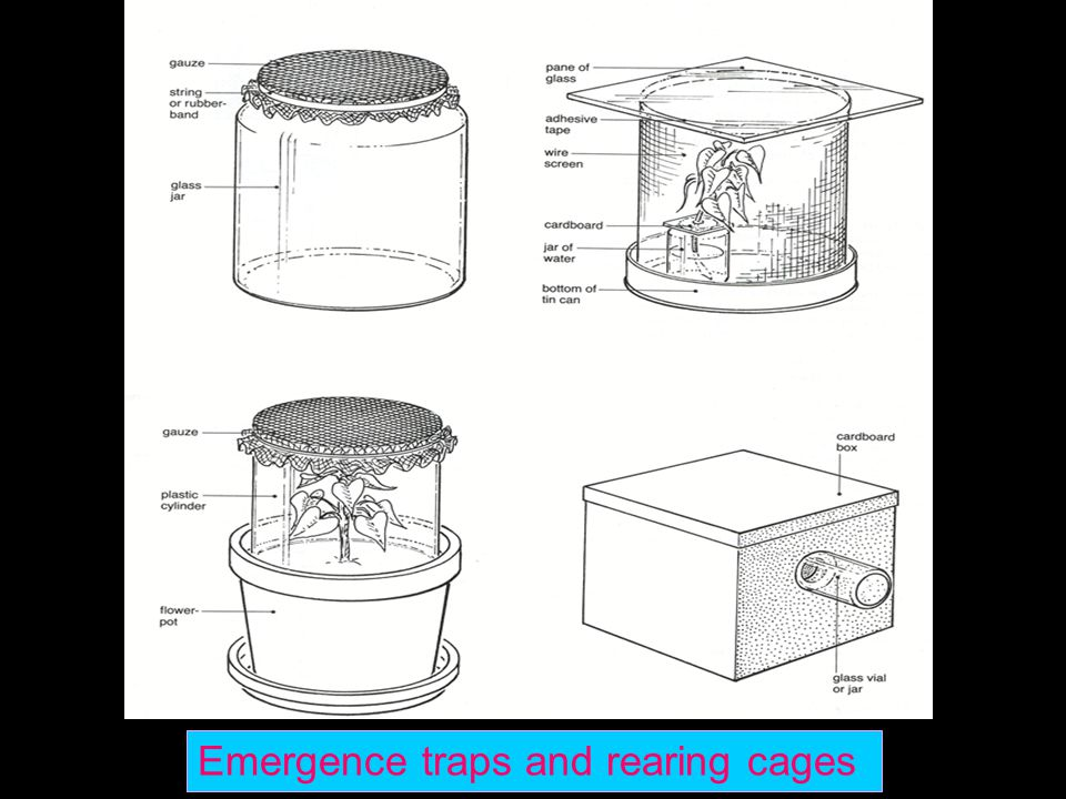 Emergence traps and rearing cages