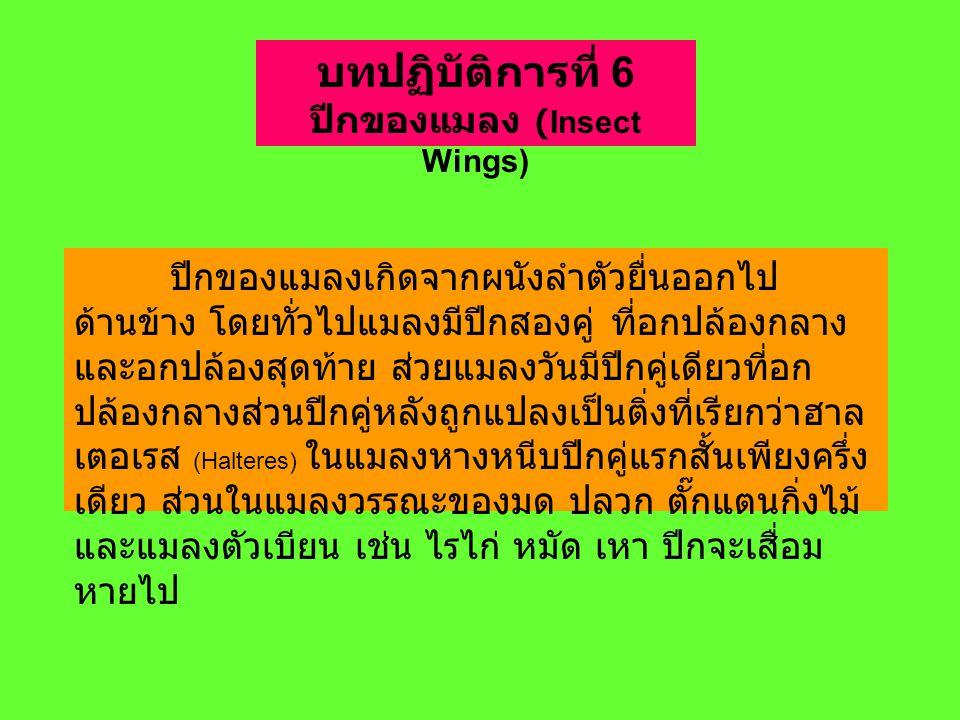 ปีกของแมลง (Insect Wings)