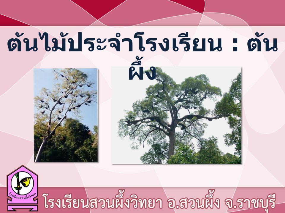 ต้นไม้ประจำโรงเรียน : ต้นผึ้ง