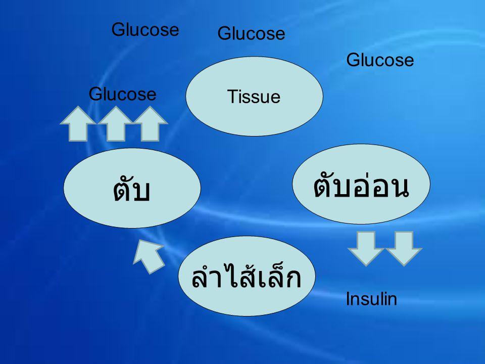 Glucose Glucose Glucose Tissue Glucose ตับอ่อน ตับ ลำไส้เล็ก Insulin