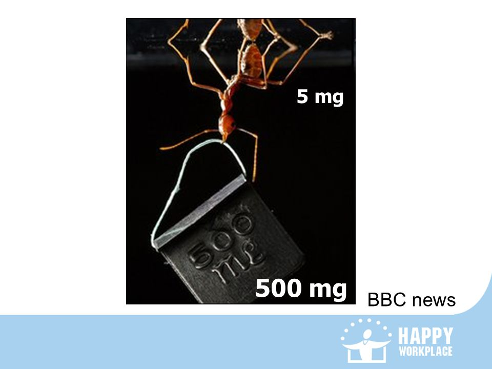 5 mg 500 mg BBC news