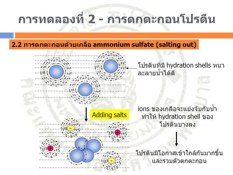 การทดลองที่ 2 - การตกตะกอนโปรตีน