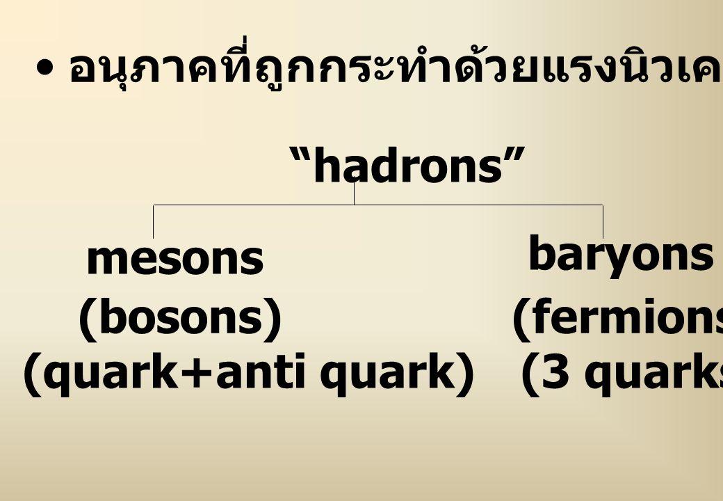 อนุภาคที่ถูกกระทำด้วยแรงนิวเคลียร์อย่างแรง เรียกว่า