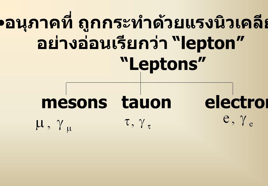 อนุภาคที่ ถูกกระทำด้วยแรงนิวเคลียร์ อย่างอ่อนเรียกว่า lepton