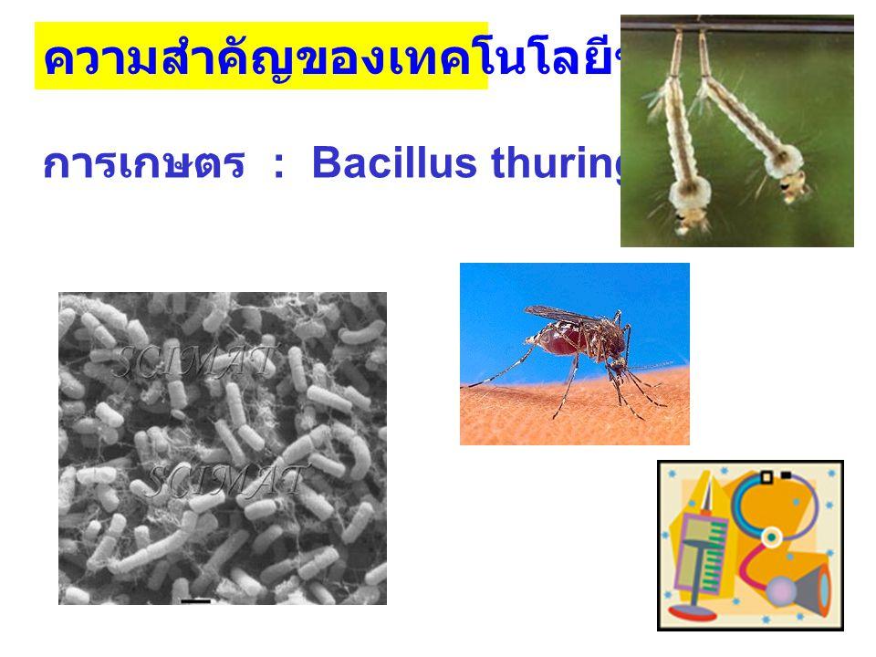 ความสำคัญของเทคโนโลยีชีวภาพ