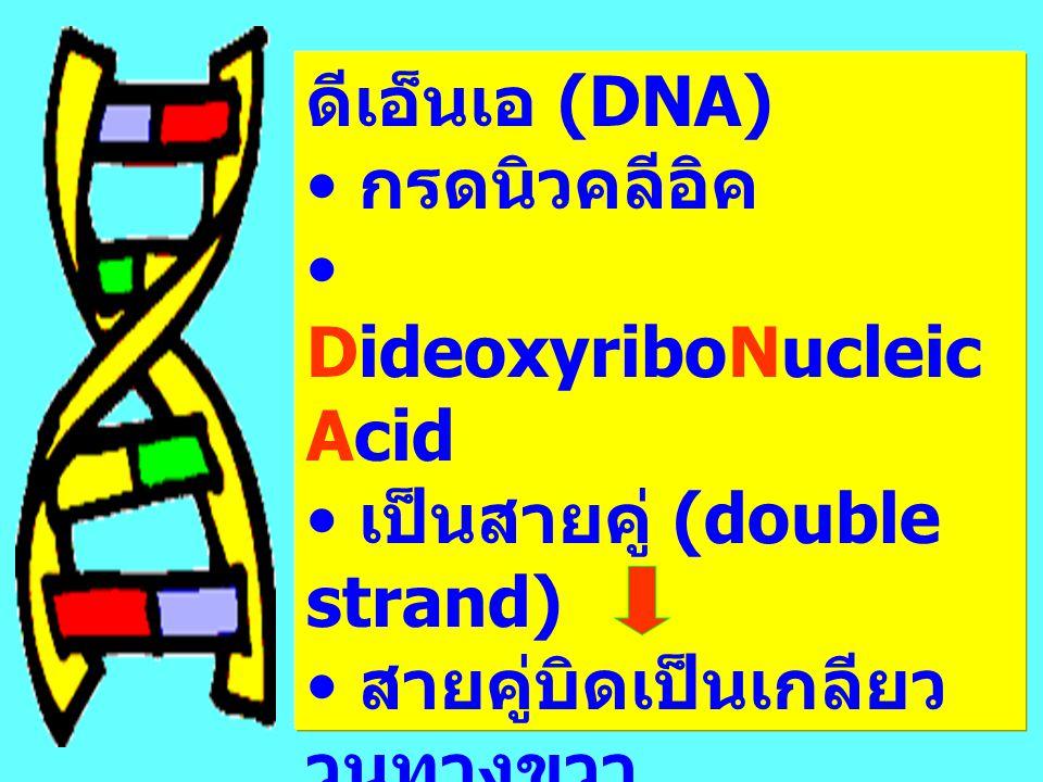 ดีเอ็นเอ (DNA) กรดนิวคลีอิค. DideoxyriboNucleic Acid. เป็นสายคู่ (double strand) สายคู่บิดเป็นเกลียว วนทางขวา.