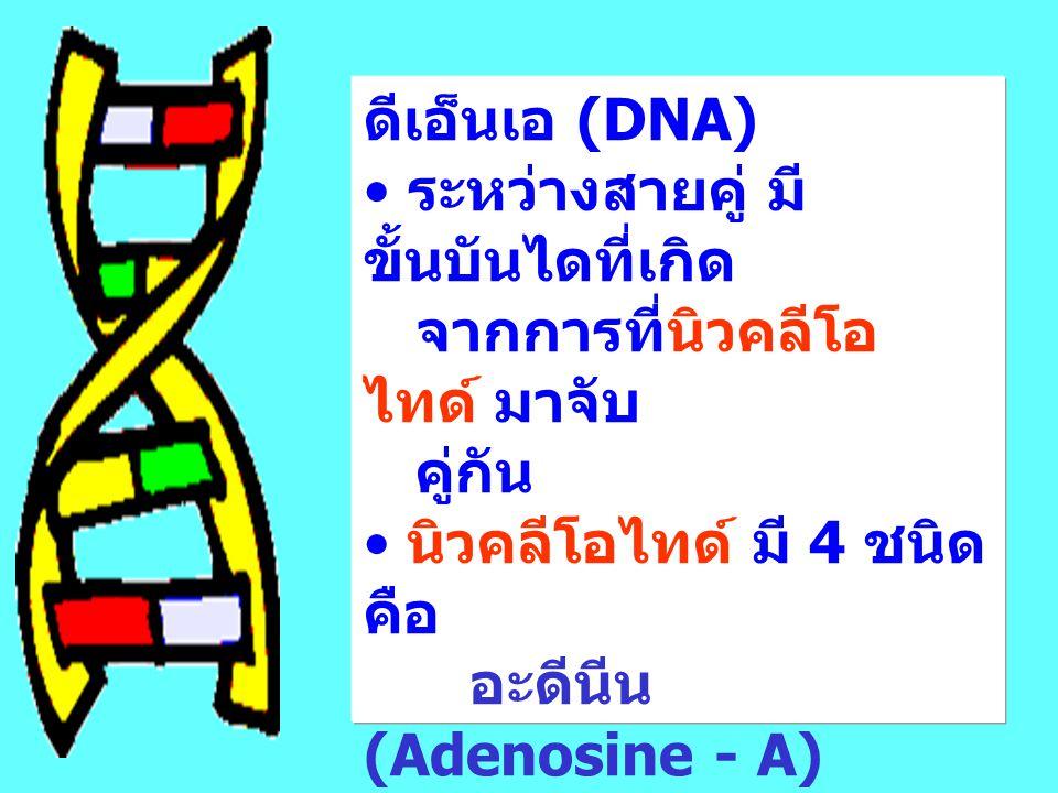 ดีเอ็นเอ (DNA) ระหว่างสายคู่ มีขั้นบันไดที่เกิด. จากการที่นิวคลีโอไทด์ มาจับ. คู่กัน. นิวคลีโอไทด์ มี 4 ชนิด คือ.