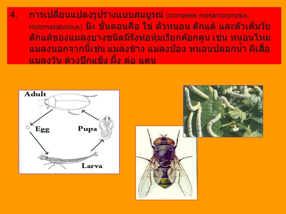 การเปลี่ยนแปลงรูปร่างแบบสมบูรณ์ (complete metamorphosis, Holometabolous) มี4 ขั้นตอนคือ ไข่ ตัวหนอน ดักแด้ และตัวเต็มวัย ดักแด้ของแมลงบางชนิดมีรังห่อหุ้มเรียกค๊อกคูน เช่น หนอนไหม แมลงนอกจากนี้เช่น แมลงช้าง แมลงป่อง หนอนปลอกน้ำ ผีเสื้อ แมลงวัน ด้วงปีกแข็ง ผึ้ง ต่อ แตน