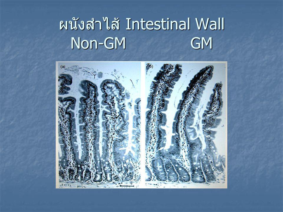 ผนังสำไส้ Intestinal Wall Non-GM GM