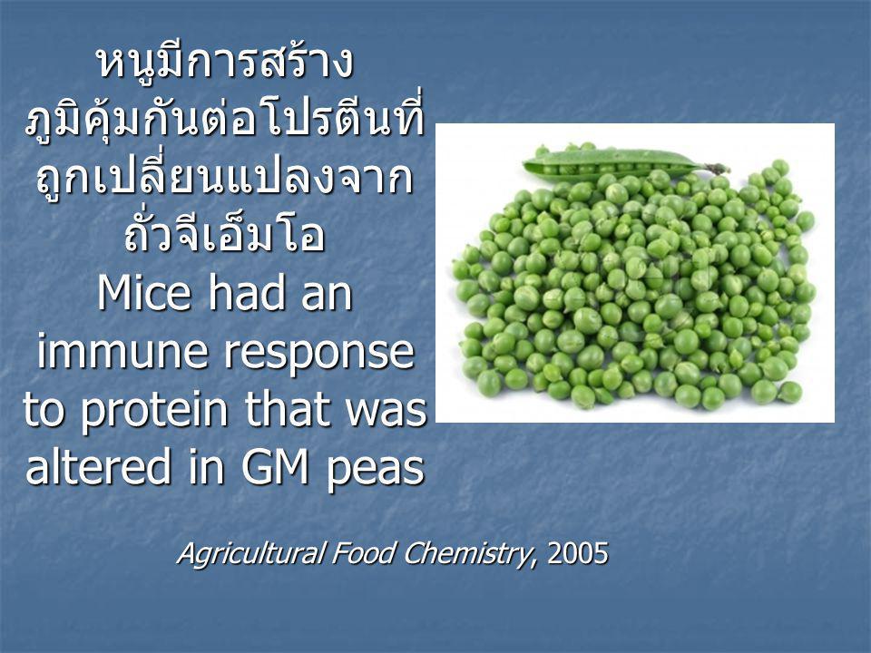 หนูมีการสร้างภูมิคุ้มกันต่อโปรตีนที่ถูกเปลี่ยนแปลงจากถั่วจีเอ็มโอ Mice had an immune response to protein that was altered in GM peas