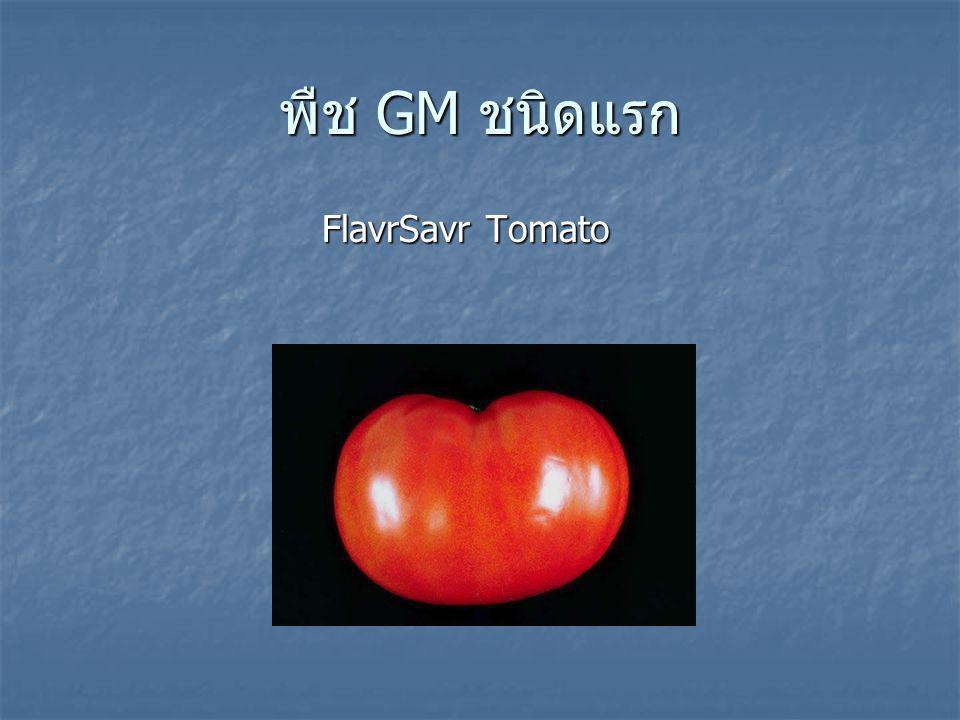 พืช GM ชนิดแรก FlavrSavr Tomato