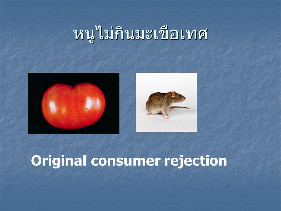 หนูไม่กินมะเขือเทศ Original consumer rejection