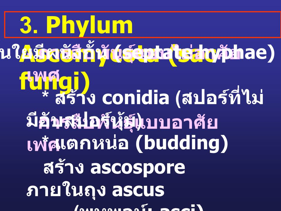 เส้นใยมีผนังกั้น (septate hyphae)