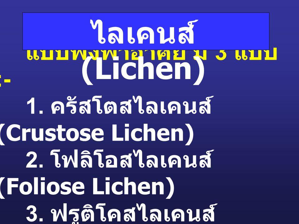 ไลเคนส์ (Lichen)