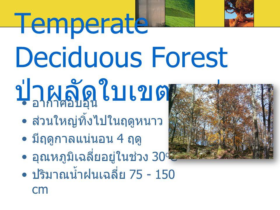 Temperate Deciduous Forest ป่าผลัดใบเขตอบอุ่น