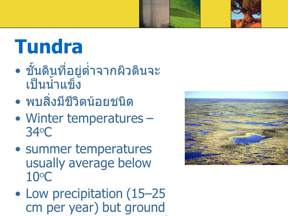 Tundra ชั้นดินที่อยู่ต่ำจากผิวดินจะเป็นน้ำแข็ง พบสิ่งมีชีวิตน้อยชนิด