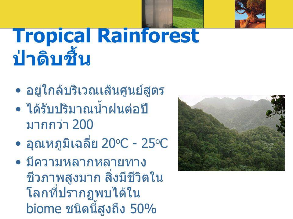 Tropical Rainforest ป่าดิบชื้น