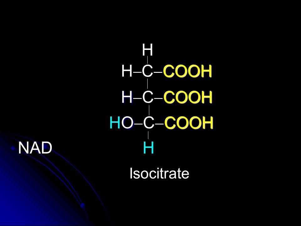H H CCOOH HCCOOH H OCCOOH NAD H Isocitrate