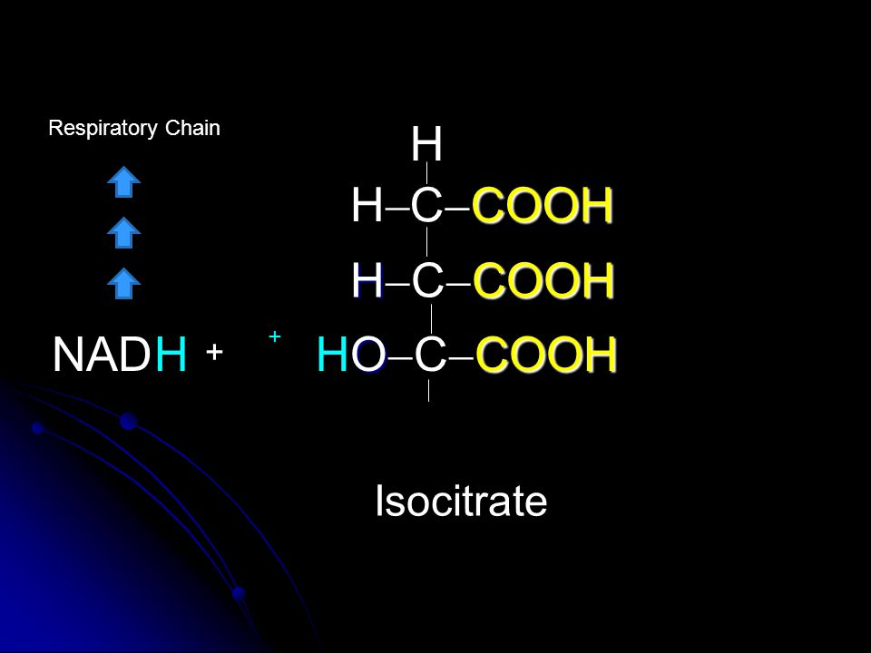 Respiratory Chain H H CCOOH HCCOOH H NAD + H OCCOOH + Isocitrate