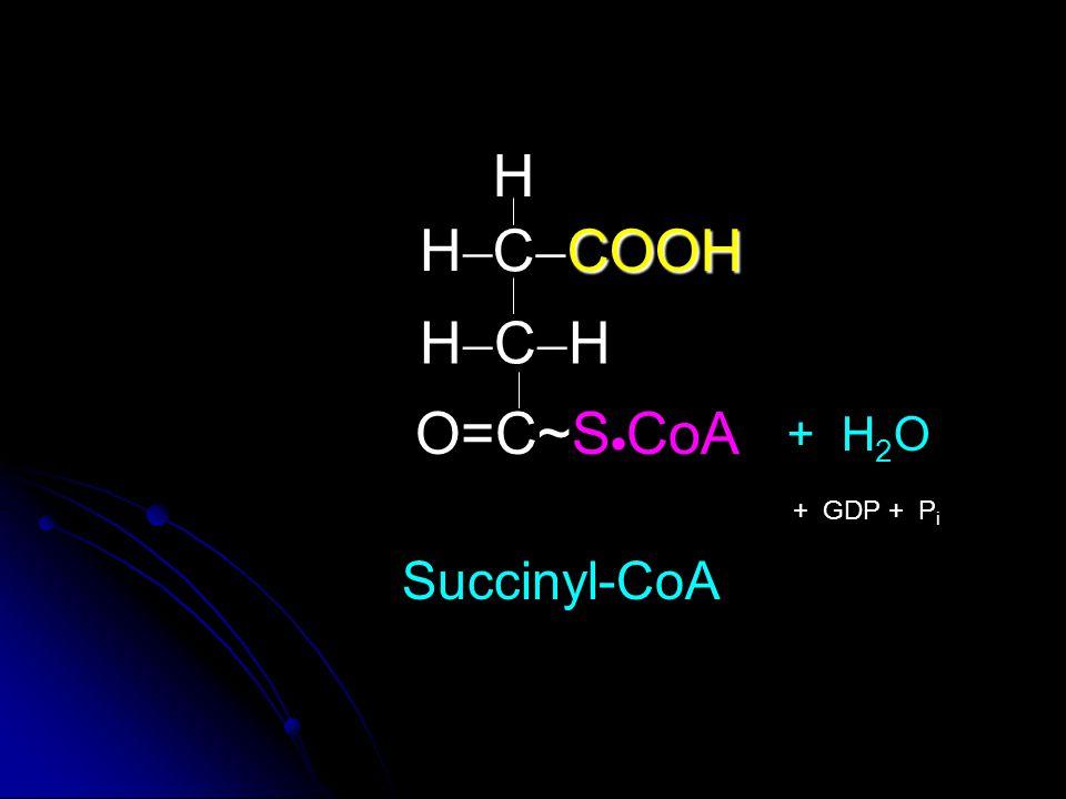 H H CCOOH HCH O=C~SCoA + H2O + GDP + Pi Succinyl-CoA