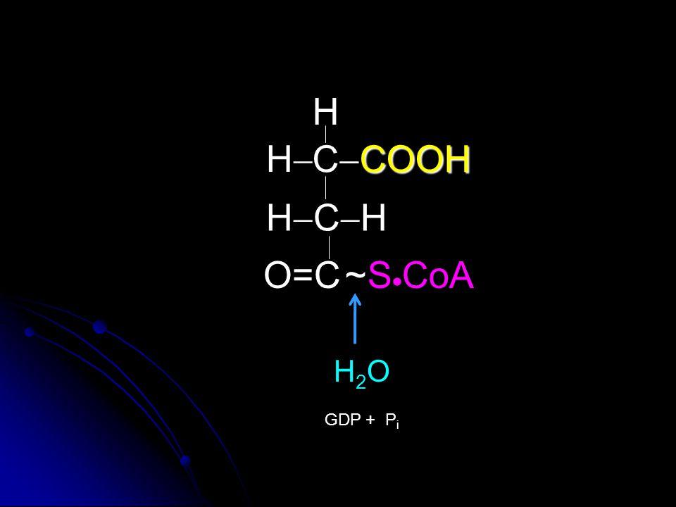 H H CCOOH HCH O=C ~ SCoA H2O GDP + Pi
