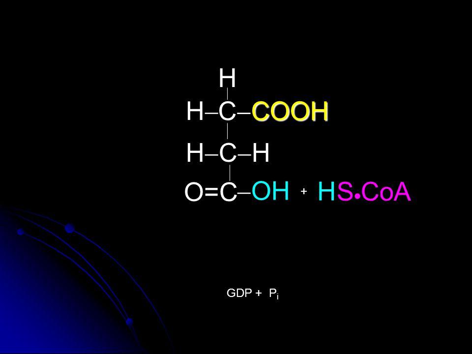 H H CCOOH HCH O=C OH H SCoA + GDP + Pi