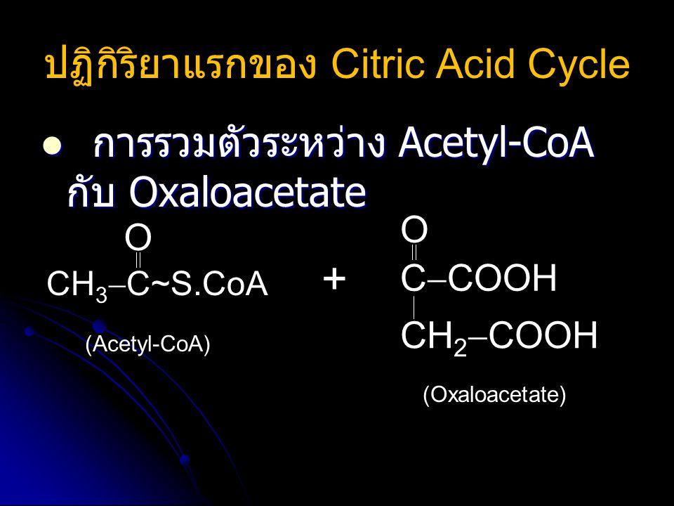ปฏิกิริยาแรกของ Citric Acid Cycle
