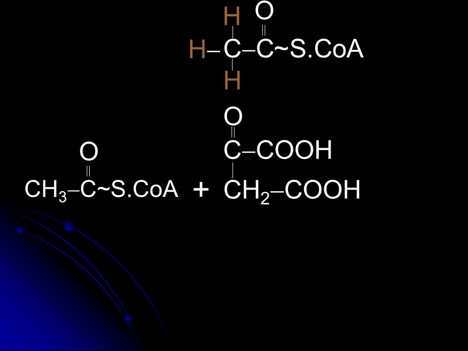 O H  H CC ~ S.CoA H O  CH3C~S.CoA  O CCOOH + CH2COOH