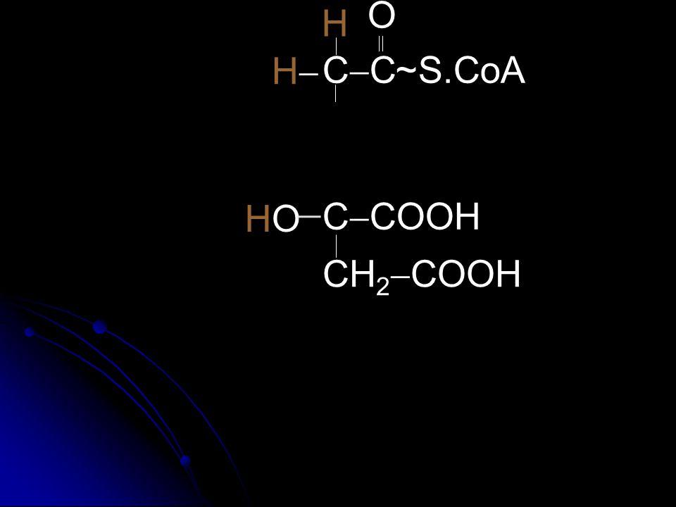 O H  H CC ~ S.CoA H O CCOOH CH2COOH