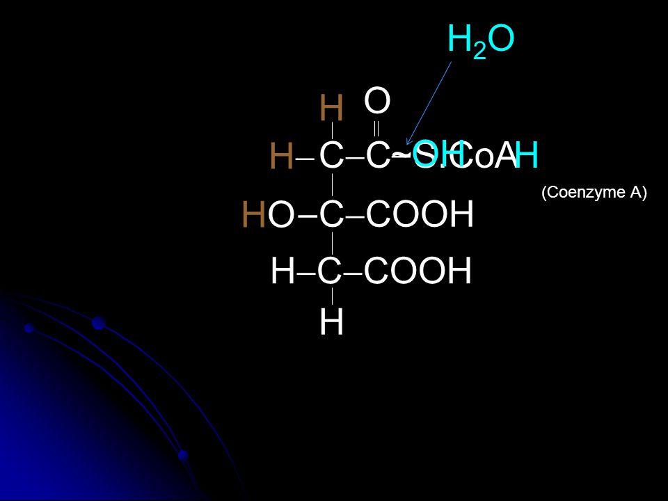 H2O O H  H CC ~ OH S.CoA H (Coenzyme A) HO  CCOOH HCCOOH H