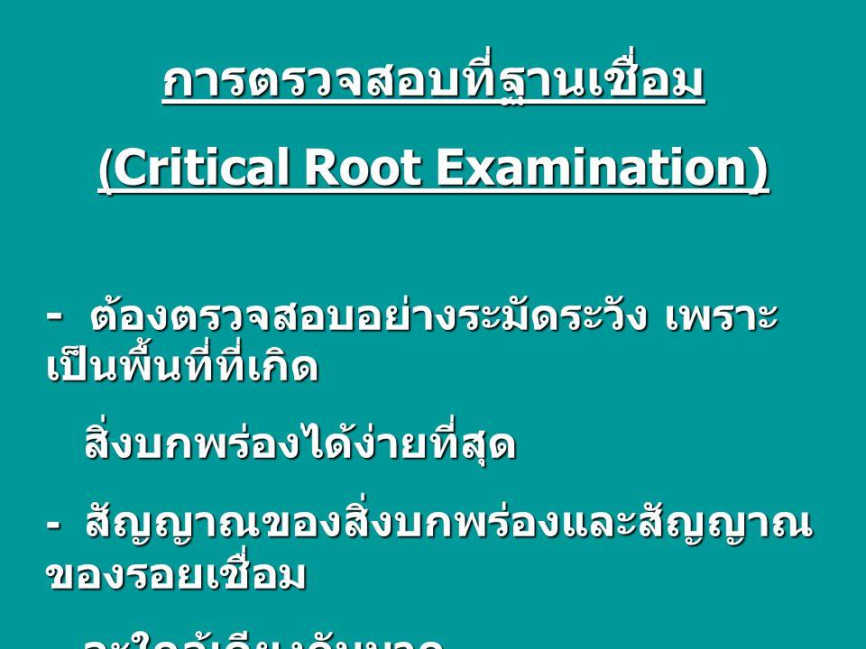 การตรวจสอบที่ฐานเชื่อม (Critical Root Examination)
