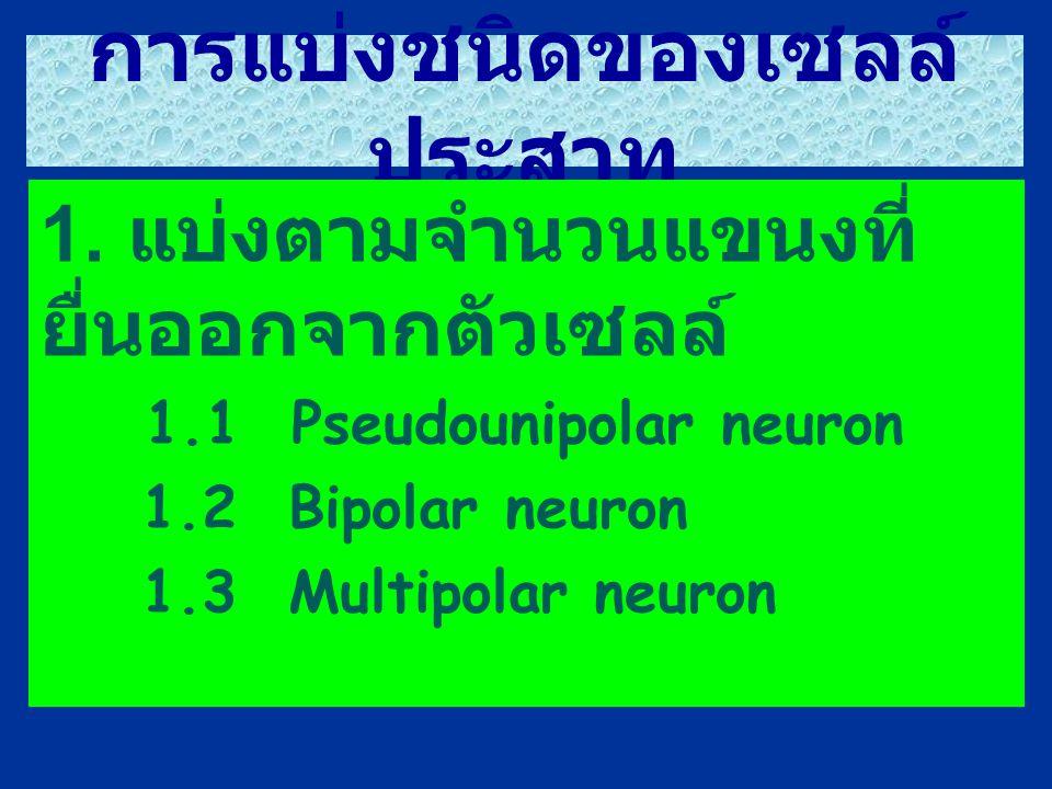 การแบ่งชนิดของเซลล์ประสาท