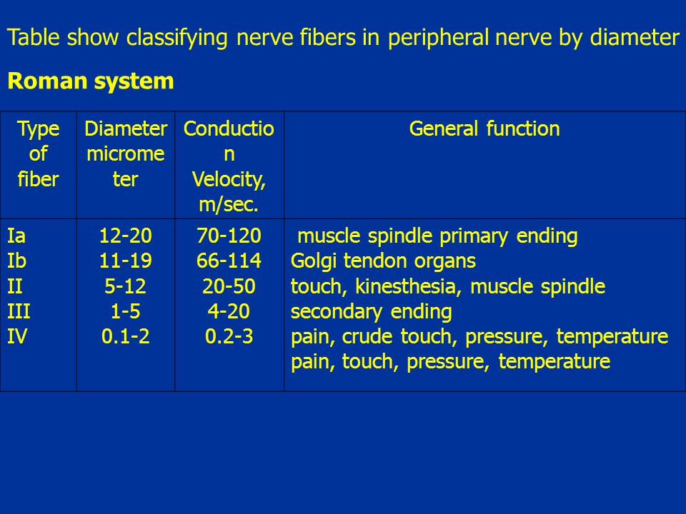 Table show classifying nerve fibers in peripheral nerve by diameter