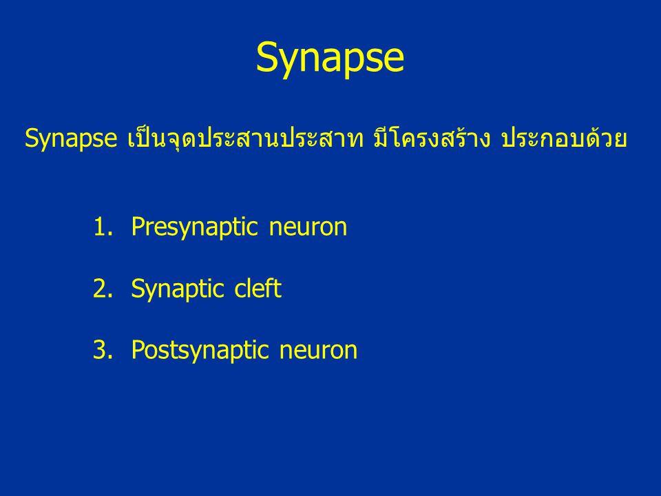 Synapse Synapse เป็นจุดประสานประสาท มีโครงสร้าง ประกอบด้วย