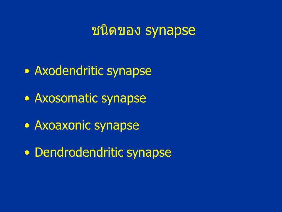 ชนิดของ synapse Axodendritic synapse Axosomatic synapse