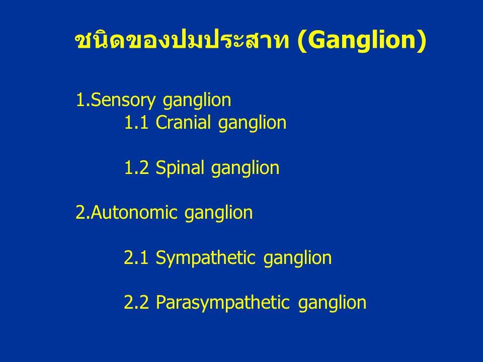 ชนิดของปมประสาท (Ganglion)