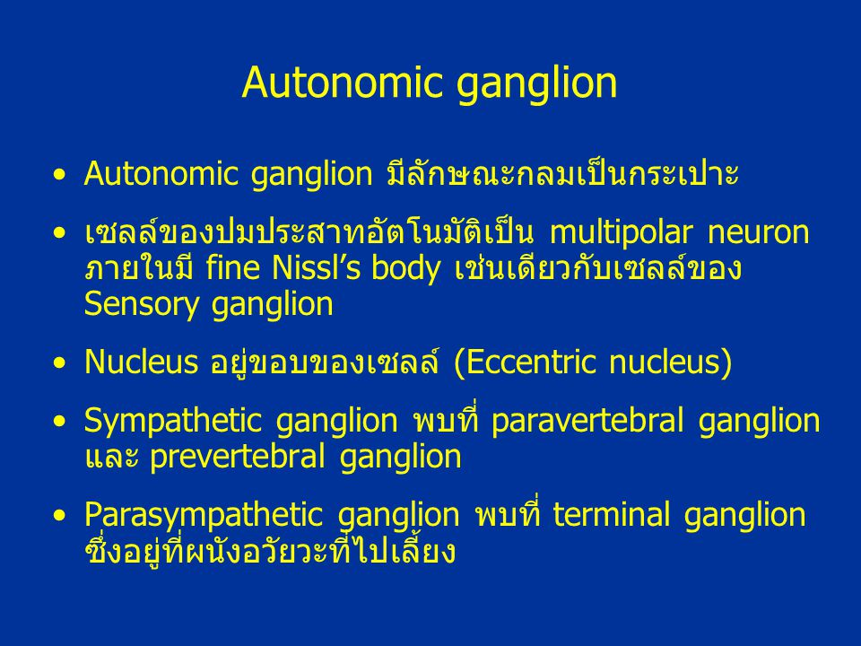 Autonomic ganglion Autonomic ganglion มีลักษณะกลมเป็นกระเปาะ