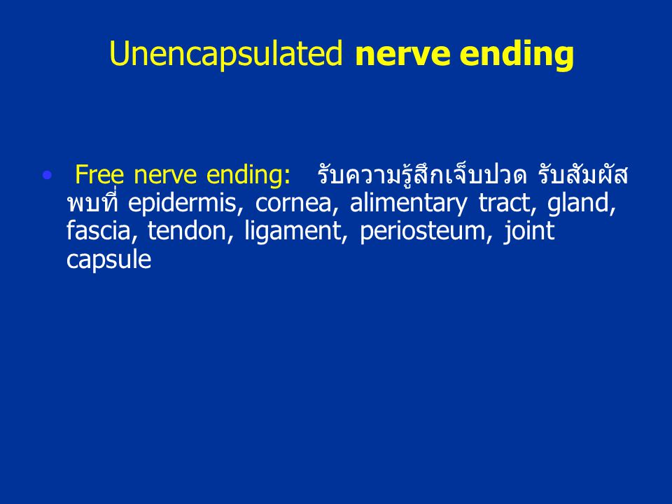 Unencapsulated nerve ending