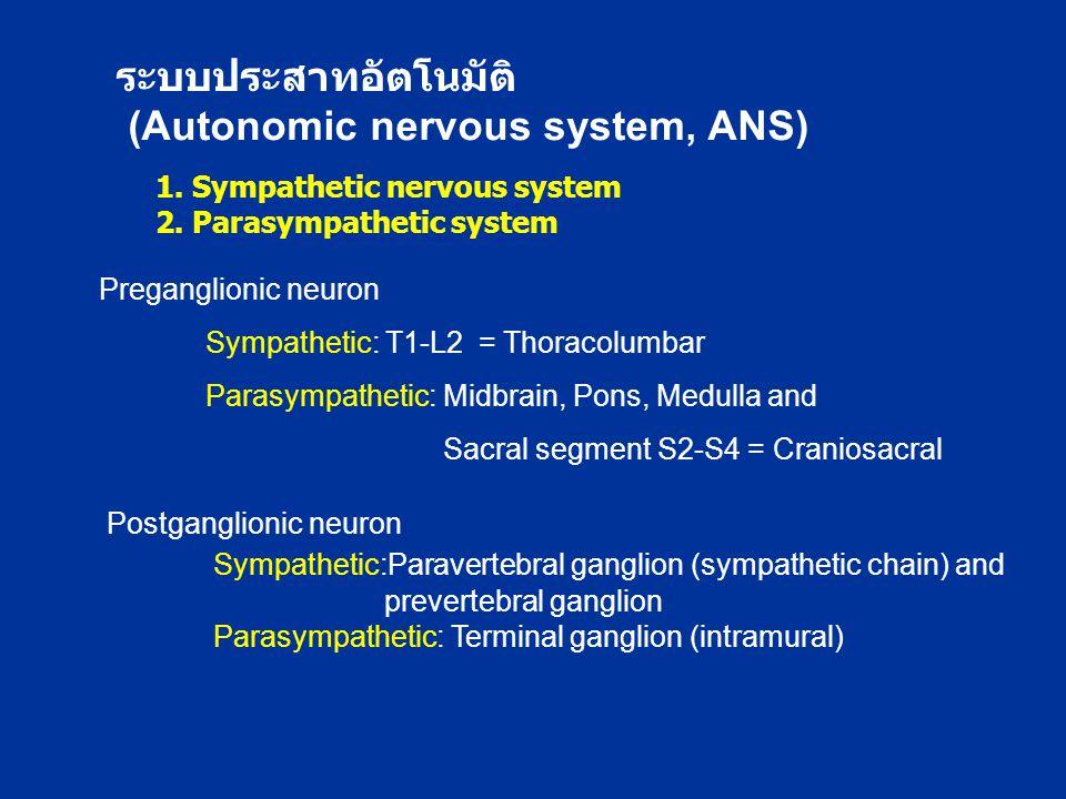1. Sympathetic nervous system 2. Parasympathetic system