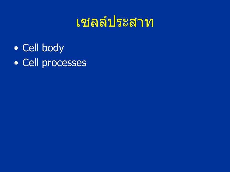 เซลล์ประสาท Cell body Cell processes