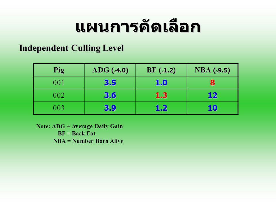 แผนการคัดเลือก Independent Culling Level Pig ADG (<4.0)