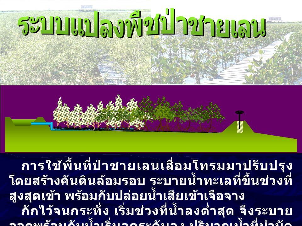 ระบบแปลงพืชป่าชายเลน