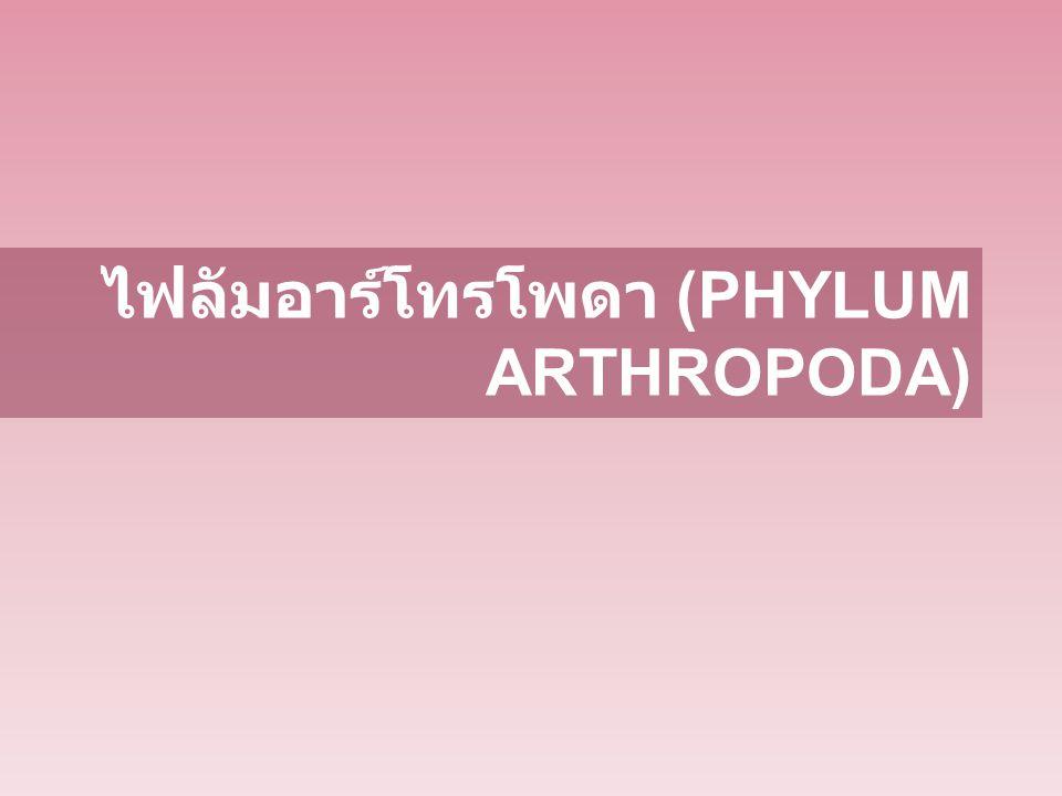 ไฟลัมอาร์โทรโพดา (PHYLUM ARTHROPODA)