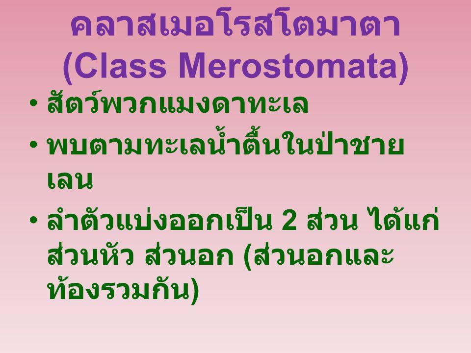 คลาสเมอโรสโตมาตา (Class Merostomata)