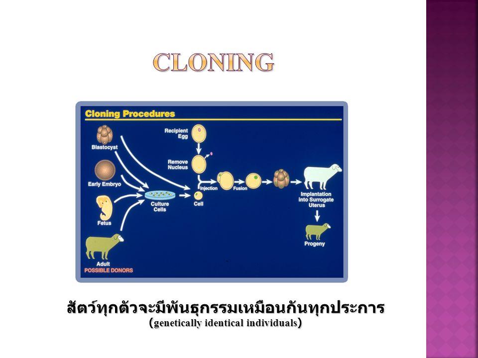 Cloning สัตว์ทุกตัวจะมีพันธุกรรมเหมือนกันทุกประการ